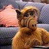 Remember this guy? Alf
