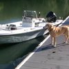 Have dog & boat...will travel.
