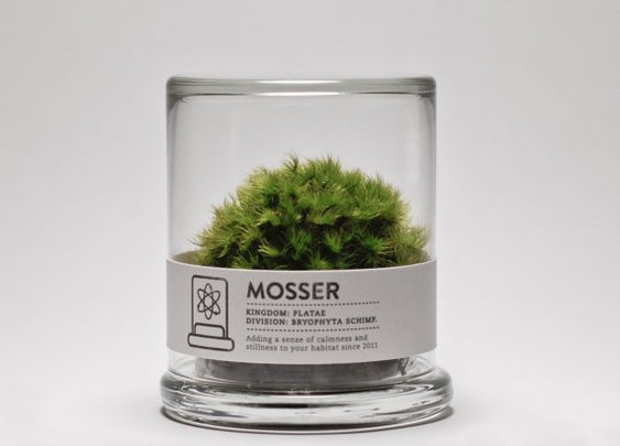 MOSSER scientific glass moss terrarium and spray by themosserstore