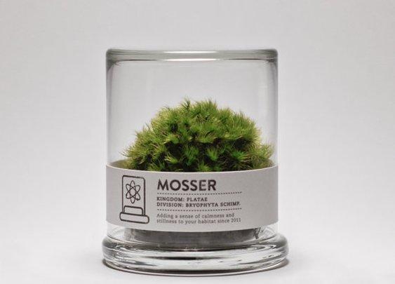 MOSSER scientific glass moss terrarium and spray by themosserstore