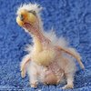 Meet Nelson, the baby parrot that could be the ugliest bird in the world  | Mail Online
