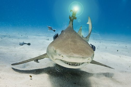 Finally, a Shark With a Laser