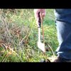 How to field dress a Grouse (Partridge)