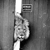 """Beware Of Dog"" » Design You Trust – Design Blog and Community"