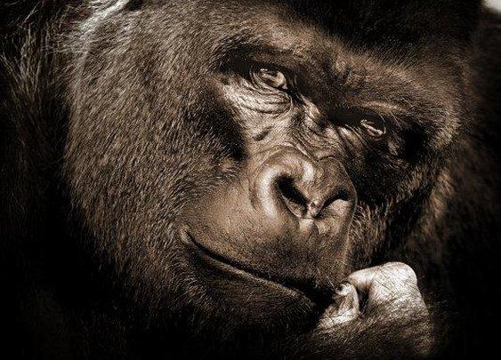 Kill the Gorilla!