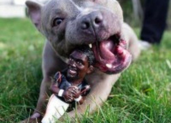 Dog Gets Revenge on Michael Vick