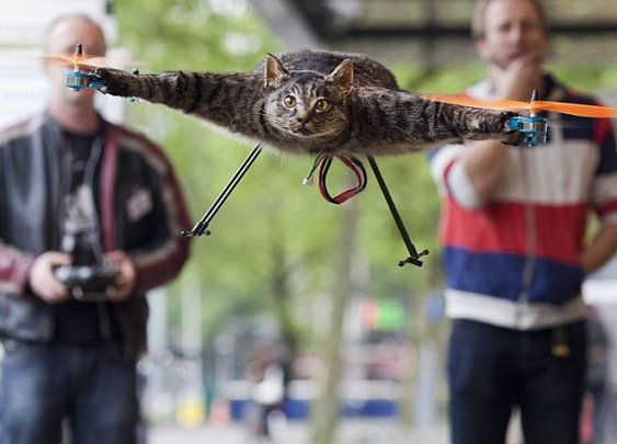 Cats away! Artist turns his dead pet into flying helicopter after it is killed by a car  | Mail Online