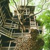 Greatest Tree House in the World