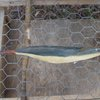 Primitive handmade fishing lure  maybe pike by SharpenedAxe