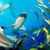 Shark Week : Discovery Channel