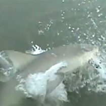 WATCH: Giant shark snags fish off woman's fishing line | Weird News - LONE STAR 92.5