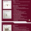 Guide to Dangerous Spider Identification in the US | Bulwark Exterminating