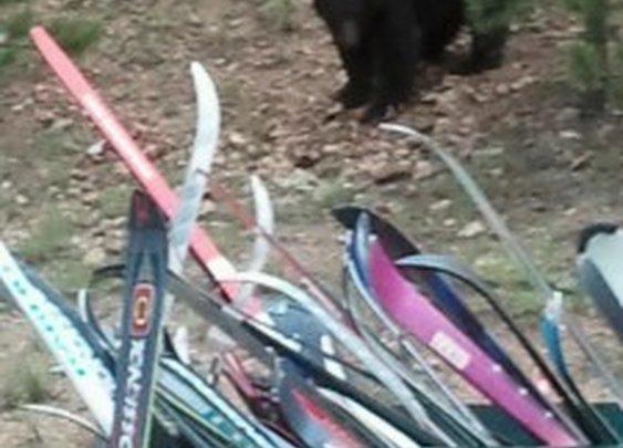 About Bear Behavior.  |    |  The Sharpened AxeThe Sharpened Axe