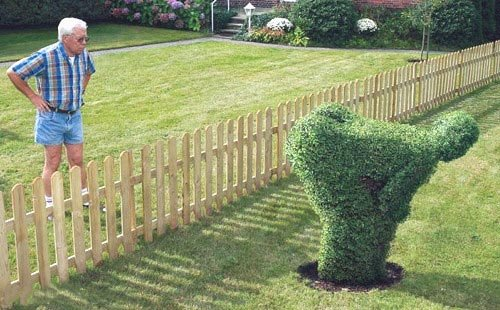 Totally Wacky and Unique Garden Shrubs, Bushes, and Hedges