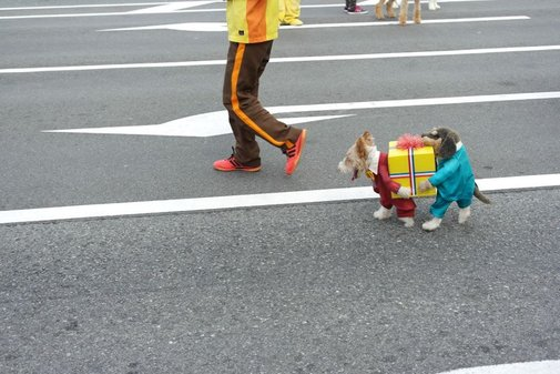 this is the greatest dog costume ever.