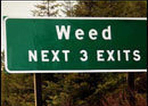 5 Pro-Marijuana Arguments That Aren't Helping   Cracked.com