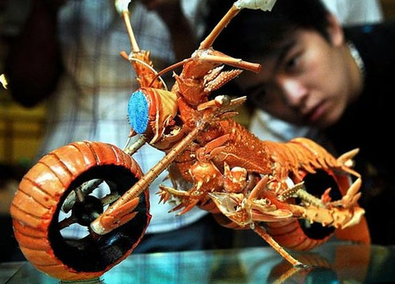 lobster chopper!