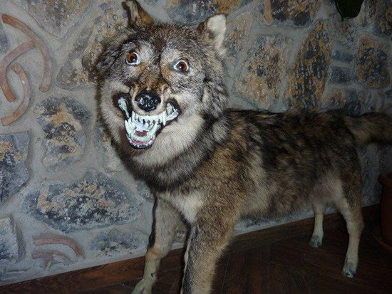The World's Worst Taxidermy - Mandatory