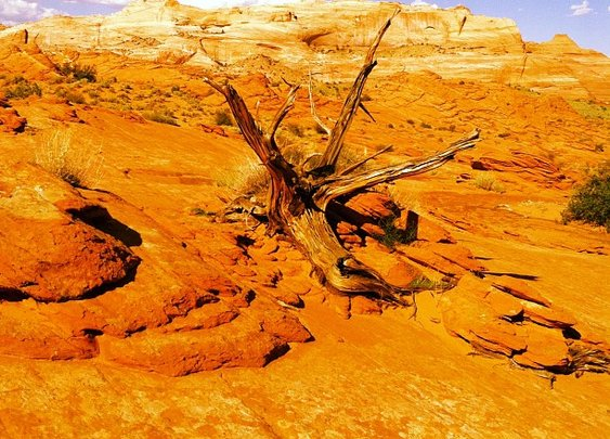A hot, dry desert hike