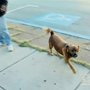 Beaver Falls Considering Dog Ban In Business District « CBS Pittsburgh