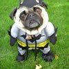 Quirky Halloween Costumes For Dogs
