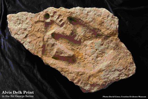 Creation Evidence Museum Online Alvis Delk Cretaceous