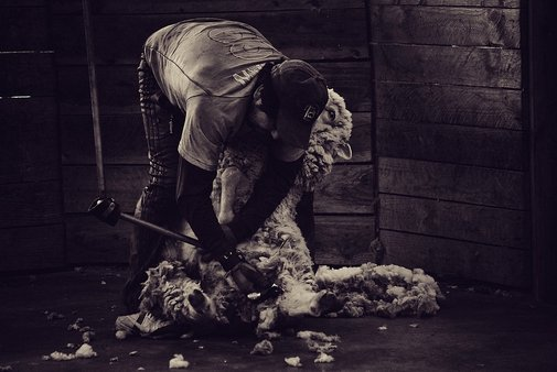 Where wool comes from