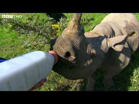 Stephen Fry Bottle Feeds Baby Rhino