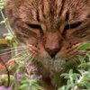 How Catnip Affects Cats [video]