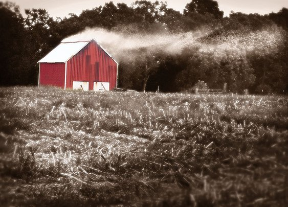 Dark-Fired Tobacco Barn