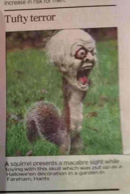 A squirrel got its head stuck in a halloween decoration and terrified a neighborhood