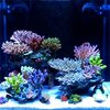 Nano Reef Aquarium News, Blog, Reviews, Features, Interviews. nanoreefblog.com