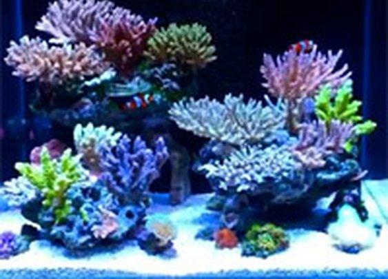 Nano Reef Aquarium News, Blog, Reviews, Features, Interviews. nanoreefblog.com