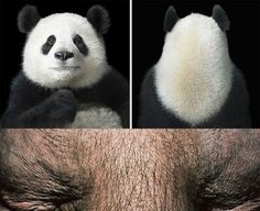 Amazing Animal Portraits by Tim Flach