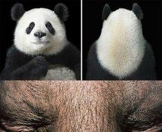 Amazing Animal Portraits by Tim Flach