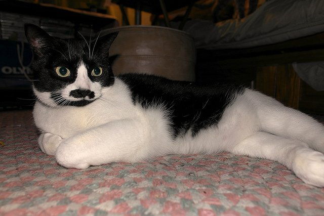 Flickr: CATS with moustaches