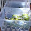 the Prairie Cottage: Mini Greenhouses
