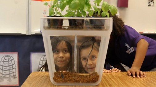 Home Aquaponics Kit: helping kids grow herbs from fish poo