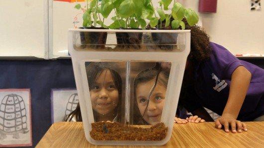 Home Aquaponics Kit: helping kids grow herbs from fish poo