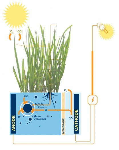 Plant-Microbial Fuel Cell generates electricity from living plants