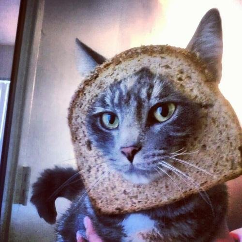 The new trend of cat breading