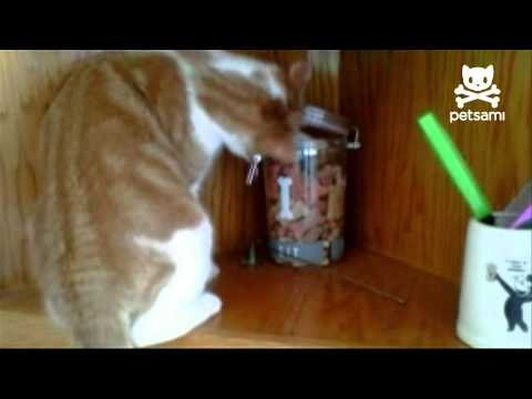 Cat Steals Cookie Only To Be Robbed By Dog