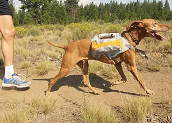 Dog Backpacking | MensJournal.com