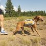 Dog Backpacking | MensJournal.com