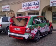 Meanwhile in UAE.. #HappyNationalDayUAE #UAE41