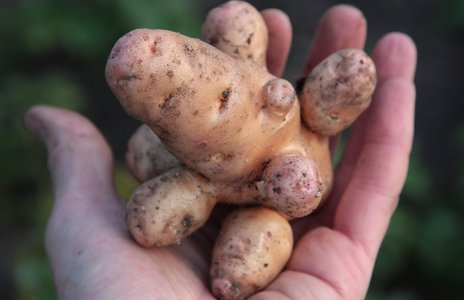 BBC - Newsbeat - Tonnes of 'ugly' produce sold as supermarkets relax rules