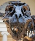Molecular analysis supports controversial claim for dinosaur cells : Nature News & Comment
