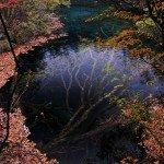 An Underwater Tree in Jiuzhaigou Valley   Colossal