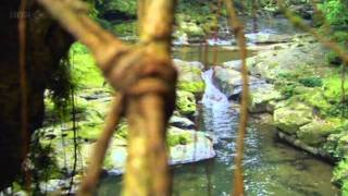 Meghalaya's  Living Bridges - Incredible India - YouTube