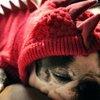 Dragon Dog Hoodie